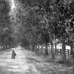 """Woman Walking on Brokaw Road, San Jose • c1890"" by worldwidearchive"