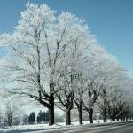 """After The Icestorm - Avenue of Ice Covered Trees"" by DMHImages"