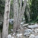 """Happy Trees"" by infanteus"
