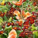 """Princes Street Gardens Boquet"" by allanprice"