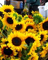 Sun Flowers at the Farmer's Market
