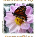 """600-butterfly-dsc04147-distracted"" by quotes"