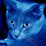 """Ash In Blue"" by lbarrett"
