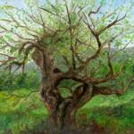 """Old Apple Tree"" by FTMcKinstry"