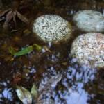 """""""Pond"""" by kvalka"""