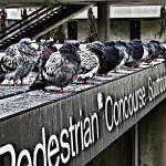 """Pedestrian Concourse"" by JBGallery"