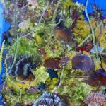 """""""coral"""" by lynndal"""