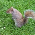 """""""Squirrel"""" by marlenechallis"""