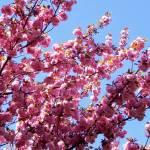 """pink"" by lynndal"