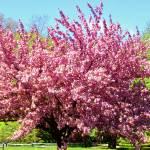 """spring 2"" by lynndal"