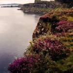 """heather-kilt-rock-isle-of-skye-scotland-20x16-b"" by sacorivergraphics"