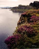 heather-kilt-rock-isle-of-skye-scotland-20x16-b