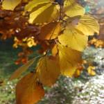 """""""Fall1_Nov08"""" by anneleroy"""