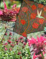 Hummingbird & Bee balm