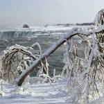 """Ice Covered Limbs above the Horseshoe Falls"" by DMHImages"