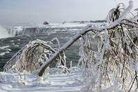 Ice Covered Limbs above the Horseshoe Falls