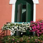 """Petunias in Burano 1"" by DonnaCorless"