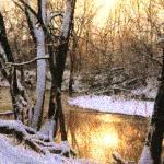 """Tenn Woods Impressionist"" by ArtForm"