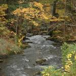 """Pretty river in the fall by Shannon Dimmitt"" by imagesdyw"
