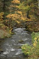 Pretty river in the fall by Shannon Dimmitt