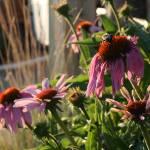 """Bumblebee"" by cherylwhite"