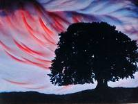 fire tree, abstract photographic image