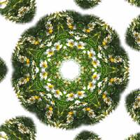 Little White Wildflower Kaleidoscope Art 1