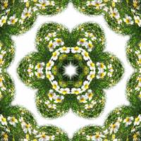 Little White Wildflower Kaleidoscope Art 3