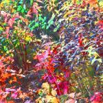 """""""Multi Color Full"""" by donjo"""