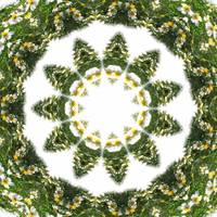 Little White Wildflower Kaleidoscope Art 5