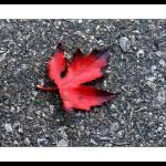 """""""Driveway Leaf"""" by BRMurphy"""