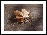 leaf on a picnic table