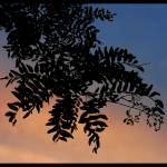 """""""Tree at Dusk"""" by BRMurphy"""