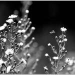 """""""September 7 Black and White 7"""" by BRMurphy"""