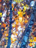 Birches Reflection