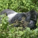 """Rwanda 2004 Big Daddy gloriousjourneyphotography"" by gloria_garrett"