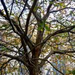 """Autumn tree"" by simonevanbergen"