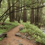 """Big Sur 2008 By The Stream gloriousjourneyphotogra"" by gloria_garrett"