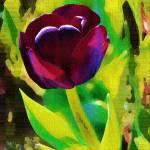 """""""Tulip"""" by hotart"""