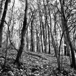 """Winterwood"" by LockeStudio"