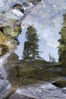 Bear Creek Reflections