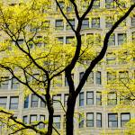 """Yellow Tree and Bulding"" by jameskorringa"