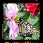 """Distracted by Butterflies 04139 (Black Background)"" by quotes"
