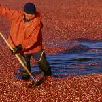 """Cranberry Bog"" by hestoft"