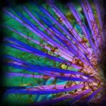 """Yucca Inversion"" by SherylKaras"