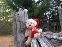 BEAR in the woods .......