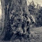 """""""drzewo"""" by abigail"""