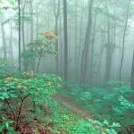 """Smoky Mountains - Flame Azaleas on Mount Shuckstac"" by timseaver"