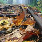 """Rails and Leaves"" by kendietz"