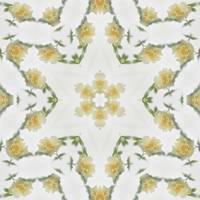 Creamy Yellow Rose Kaleidoscope Art 2